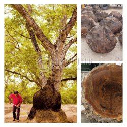 Gỗ Nu – Tinh hoa của gỗ